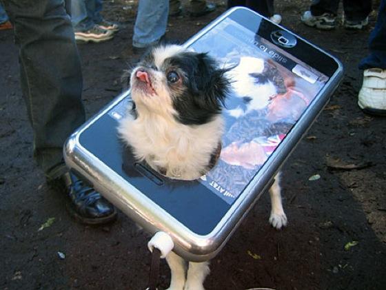 iPhone Dog