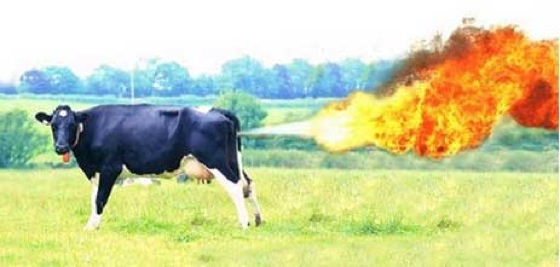 cowfarts.jpg