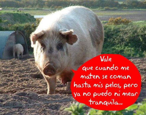 pig-plastics