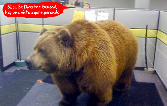 bear cubicle